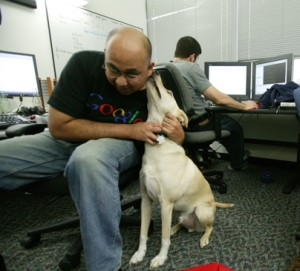 Google dropper Microsoft